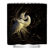 Great Egret In Great Light Shower Curtain