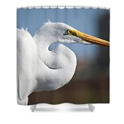 Great Egret Portrait Shower Curtain