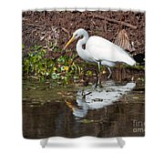 Great Egret Searching For Food In The Marsh Shower Curtain