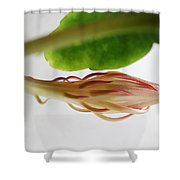 Great Expectations Shower Curtain