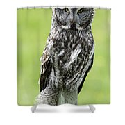 Great Grey Owl, Water Valley, Alberta Shower Curtain