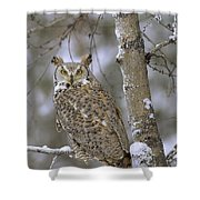 Great Horned Owl In Its Pale Form Shower Curtain by Tim Fitzharris