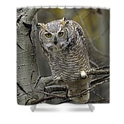 Great Horned Owl Pale Form Kootenays Shower Curtain