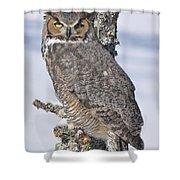 Great Horned Owl Portrait Shower Curtain