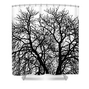 Great Old Tree Shower Curtain