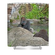 Great Silverback Shower Curtain
