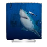 Great White Shark And Pilot Fish Shower Curtain