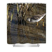 Greater Yellowlegs At Spi Shower Curtain
