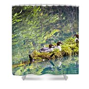 Grebe Podicipedidae Birds Sitting On A Shower Curtain