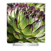Green And Red Succulent Shower Curtain