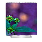 Green And Turquoise Shower Curtain