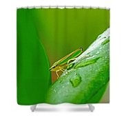 Green And Yellow Bug Shower Curtain