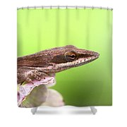 Green Anole In Pastels Shower Curtain