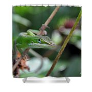 Green Anole Shower Curtain