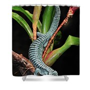 Green Arboreal Alligator Lizard Abronia Shower Curtain
