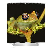 Green Bright-eyed Frog Boophis Viridis Shower Curtain