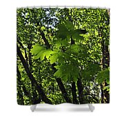 Green Canopy Shower Curtain