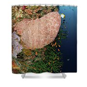Green Coral With Red Fish And Pink Shower Curtain