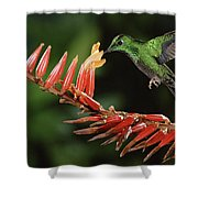 Green-crowned Brilliant Heliodoxa Shower Curtain
