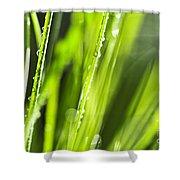 Green Dewy Grass  Shower Curtain by Elena Elisseeva