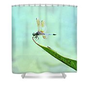 Green Dragonfly Waiting Shower Curtain