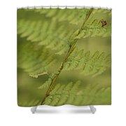 Green Ferns Blend Together Shower Curtain