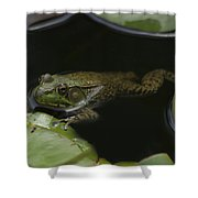 Green Frog And Lily Pads 9613 Shower Curtain