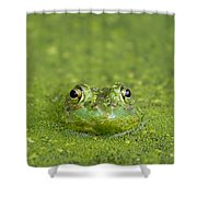 Green Frog Eyes Shower Curtain