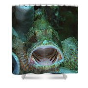 Green Grouper With Open Mouth, North Shower Curtain by Mathieu Meur