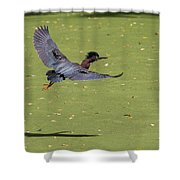 Green Heron In Flight Shower Curtain