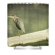Green Heron On A Log Shower Curtain