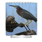 Green Heron Visiting The Pond Shower Curtain