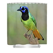 Green Jay Shower Curtain