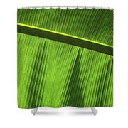 Green Leaf, Close-up Shower Curtain