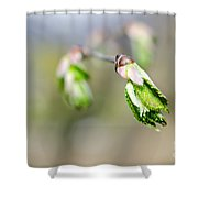 Green Leaf In Spring Shower Curtain