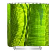 Green Leaf Shower Curtain by Setsiri Silapasuwanchai