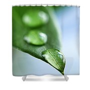 Green Leaf With Water Drops Shower Curtain