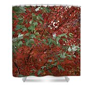 Green Leaves Against Red Leaves Shower Curtain