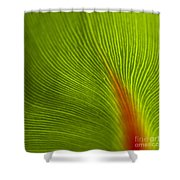 Green Leaves Series 10 Shower Curtain