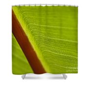 Green Leaves Series  8 Shower Curtain