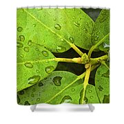Green Leaves With Water Droplets Shower Curtain