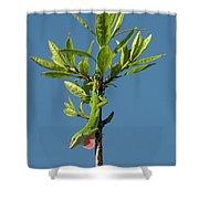 Green Lizard In Love Shower Curtain