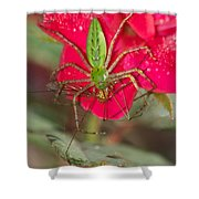 Green Lynx And Pray 8625 3375 Shower Curtain