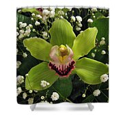 Green Orchid In Baby's Breath Shower Curtain