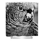 Green Parrot - Bw Shower Curtain