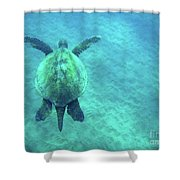 Green Sea Turtle 3 Shower Curtain