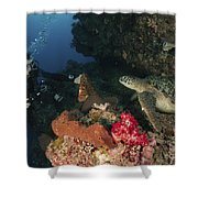 Green Sea Turtle And Underwater Shower Curtain
