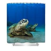 Green Sea Turtle Couple Shower Curtain