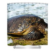 Green Sea Turtle Of Hawaii Shower Curtain
