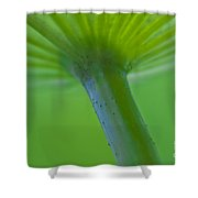 Green Shape Shower Curtain by Heiko Koehrer-Wagner